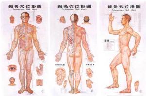 Acu_Chart_body